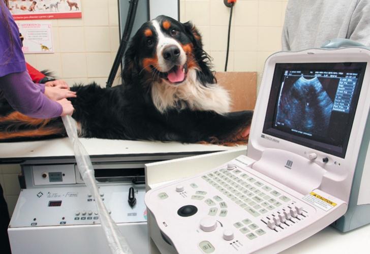 18012015_0958_sociedad_mascotas-perros-ecografia-.jpg_1853027552