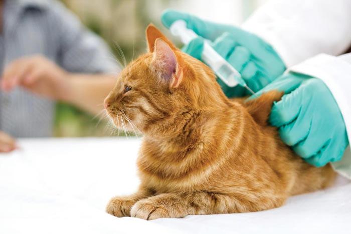 vacunas-para-gatos